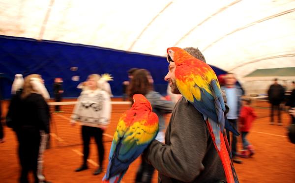 Ary arakangy patří mezi nejpestřejší papoušky v hale na Cibulce (Foto: Milena Potůčková, Čoko-papoušek.cz)