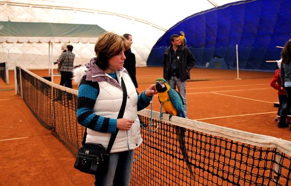 Létání v tenisové hale Cibulka probíhá jen přes zimu, brzy už začne sezóna létání venku (Foto: Milena Potůčková, Čoko-papoušek.cz)