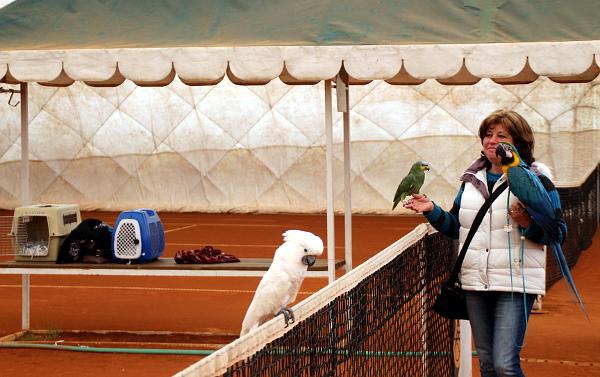 Tenisová hala je vytápěná, papoušci tak mohou využít zimní sezónu v volnému létání alespoň na omezeném prostoru (Foto: Milena Potůčková, Čoko-papoušek.cz)