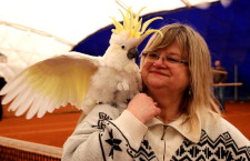 Krytá hala v Praze Na Cibulce zavedla tradici skupinového volného létání papoušků
