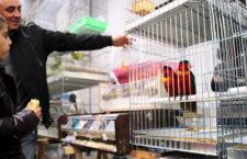 Přehled ptačích burz a výstav pro víkend 28. až 30. května 2021