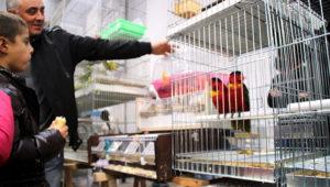 Ptačí burza Reggio Emilia