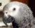 Statistika CITES za rok 2019: Počet registrovaných papoušků žako v Česku překročil 10 tisíc