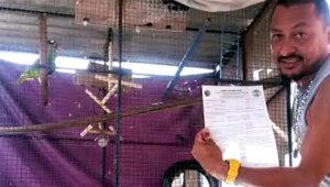 Belize registruje papoušky