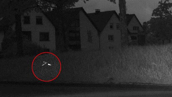 Dopravní policisty v Německu zmátl letící papoušek. Překročil povolenou rychlost