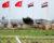 I přes válku kvete na syrsko-turecké hranici obchod s pašovanými papoušky