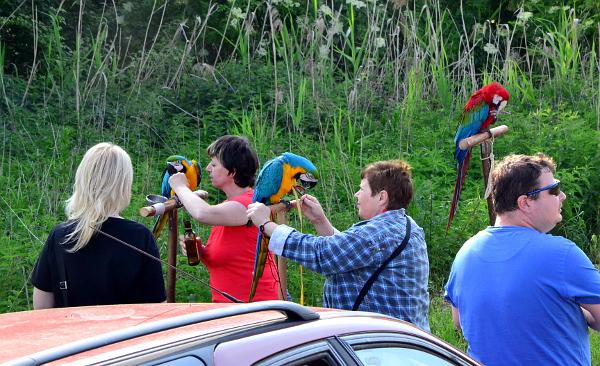 Účastníci hlučínského srazu před vypouštěním papoušků (Foto: Veronika Tomicová)