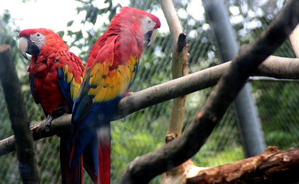 Pohled na mladé arakangy skrz sklo tropické haly Yucatan (Foto: Jan Potůček, Ararauna.cz)