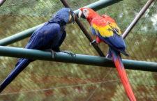 Na návštěvě papouščích expozic ve zlínské zoologické zahradě Lešná