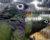 Přehled ptačích burz a výstav pro víkend 22. až 24. července 2016
