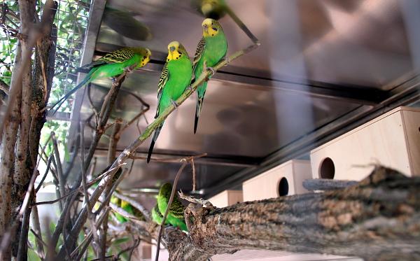 Voliéry s přírodními andulkami - potomky ptáků dovezených přímo z Austrálie (Foto: Jan Potůček, Ararauna.cz)