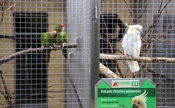 Kakaduové zatím obývají společný pavilon s jihoamerickými papoušky, měli by se ale dočkat svého vlastního pavilonu (Foto: Jan Potůček, Ararauna.cz)