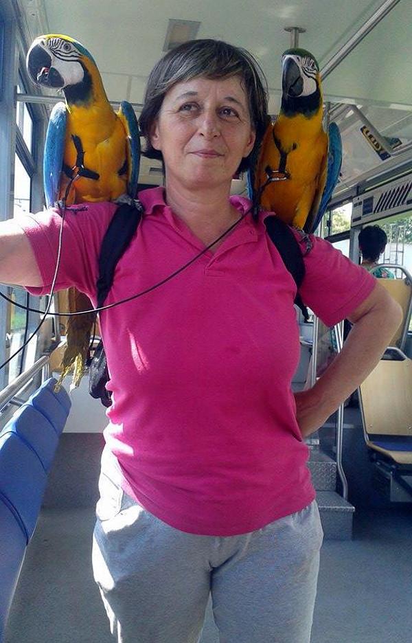 Komu se poštěstí potkat v tramvaji chovatelku se dvěma ary? (Foto: Jarmila Tomečková)