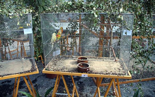 Svoji sekci na výstavě mají i mutační papoušci (Foto: Jan Potůček, Ararauna.cz)