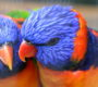 Obrazem: Jak vypadá letošní výstava exotického ptactva v Botanické zahradě Univerzity Karlovy?