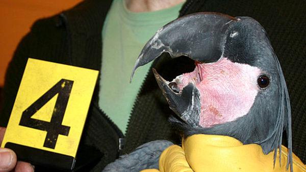 Celní správa chce rozšířit kompetence v případech pašování zvířat. Ráda by nahradila Policii
