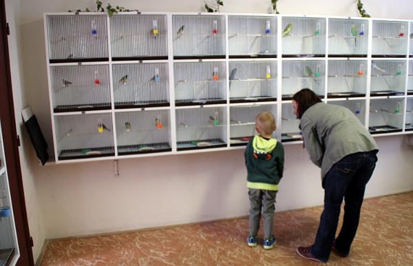 Klece s drobnými exoty a andulkami v prvním patře výstavy (Foto: Jan Potůček, Ararauna.cz)