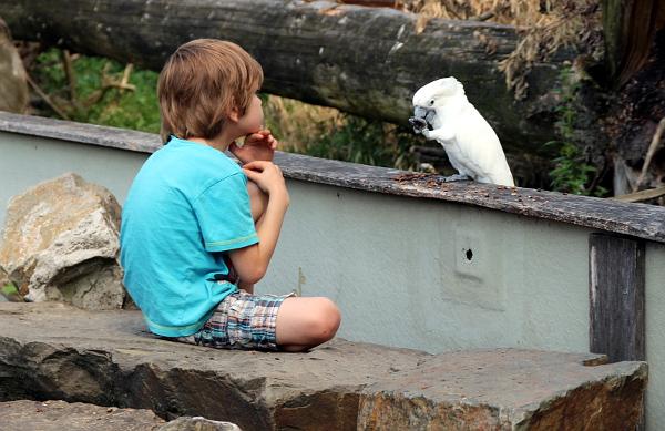 Kakadu bílý žebrá na návštěvnících dobrotu (Foto: Jan Potůček, Ararauna.cz)