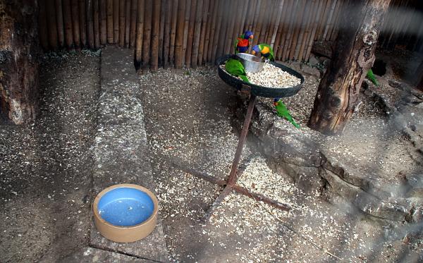 Modrá miska na vodu vyschla. Není divu, na ochozu tropické haly je asi 45 stupňů... (Foto: Jan Potůček, Ararauna.cz)