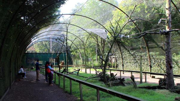 Na návštěvě ptačího parku, zoo a záchytného centra Veldhoven v Holandsku