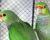 Přehled ptačích burz a výstav pro víkend 30. září až 2. října 2016