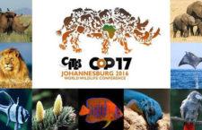 Bude žako v CITES I? Konference, která o tom rozhodne, už probíhá v Johannesburgu