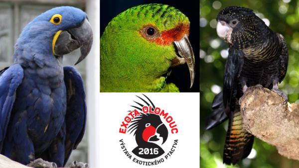 Exota Olomouc letos vystaví ary hyacintové, kakadu havraní, kogny a 14 druhů loriů