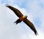 Papouščí den u Šumperka se letos koná v sobotu 3. srpna. Sjedou se volně létající papoušci z celé republiky