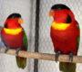 Zajímá vás, kam mizí papoušci z výkupu? Česko loni vyvezlo exoty za 75 milionů korun