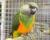 Přehled ptačích burz a výstav pro víkend 21. až 23. června 2019