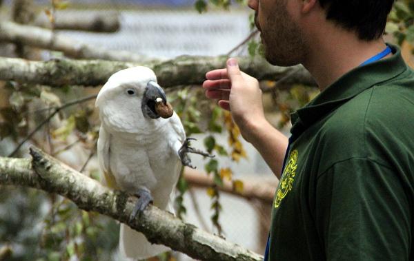Odměna pro ochočeného kakadu bílého ze společnosti Laguna (Foto: Jan Potůček, Ararauna.cz)