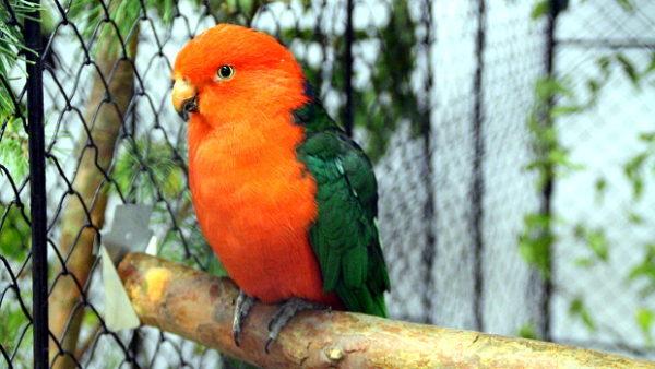 Přehled ptačích burz a výstav pro víkend 13. až 15. prosince 2019