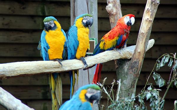 Část papoušků v Zoo Veldhoven je puštěna na volno (Foto: Jan Potůček, Ararauna.cz)