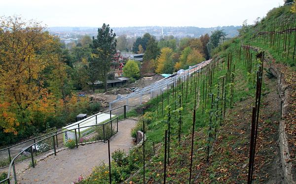 Pohled z vinice nad pavilonem (Foto: Jan Potůček, Ararauna.cz)