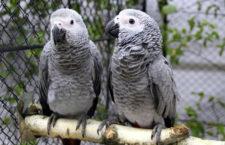 Přehled ptačích burz a výstav pro víkend 17. až 19. července 2020
