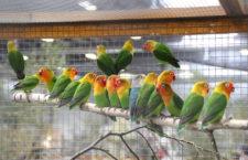 Přehled ptačích burz a výstav pro víkend 12. až 14. června 2020