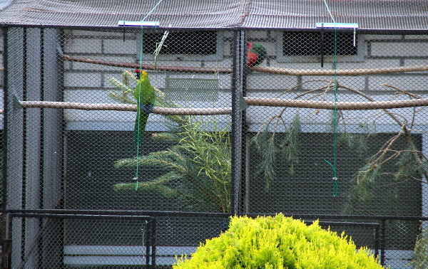 Pohled na sousedící voliéry s s papoušky chocholatými a mladým papouškem karmínovým (Foto: Jan Potůček, Ararauna.cz)