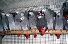 Aktivisté požadují po skupině G20 úplný zákaz obchodování s volně žijícími živočichy. I kvůli koronaviru