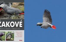 Žakové – konečně knížka, která ukazuje, jak je to s těmito papoušky v přírodě