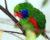 Přehled ptačích burz a výstav pro víkend 9. až 11. prosince 2016