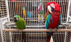 Papoušci ze zrušeného kanadského útulku skončili v bývalé textilce ve Vancouveru