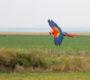Jak vybrat vhodné místo pro volné létání papoušků?