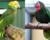 Statistika CITES: Loni v Česku přibylo přes sto amazoňanů velkých a kubánských