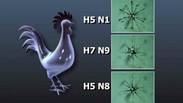 Ptačí chřipka už je v Praze i Olomouci. Jak ochránit opeřené mazlíčky v domácnosti?