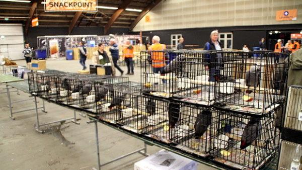 Organizátoři ptačí burzy ve Zwolle varují: nizozemské úřady chystají zátah na žaky