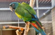 Papouščí zoo Bošovice zahájí šestou sezónu s 45 druhy papoušků ve více než 200 jedincích