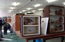 Týniště nad Orlicí je na hranici ochranného pásma ptačí chřipky, burza 26. února ale bude