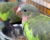 Přehled ptačích burz a výstav pro víkend 10. až 12. července 2020