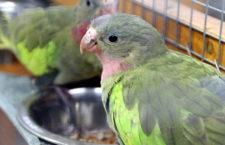 Konec zákazu ptačích burz a výstav v Česku: Státní veterinární správa ho odvolala