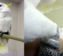 Neulétl vám kakadu žlutočečelatý? Pražský útulek v Dolních Měcholupech hledá jeho majitele